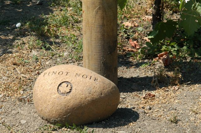Pinot Noir Vineyard Sign