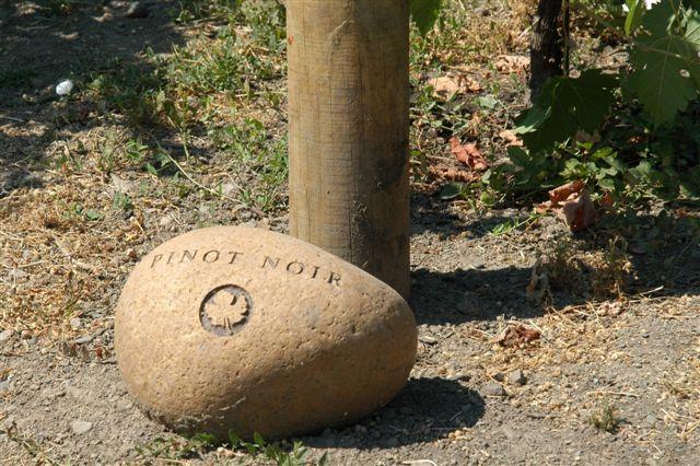 Pinot Noir Vineyard Sign